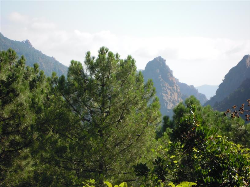 Voie Allegria, Castellu d`Ornucciu, Bavella, Corse
